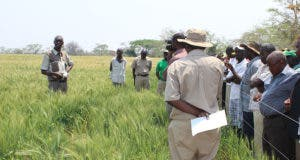 Command Agric